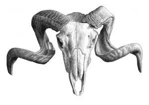 36801654 - illustration with skull. hand draw.